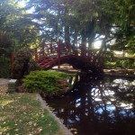 Kowhai Park Bridge - by kate