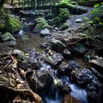Manawatu-Gorge-Walk-MWF