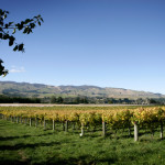 pohangina-valley-vineyards