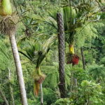 Colourful trees along Tara Mana Walk - Credit Judy Bennett-Smith