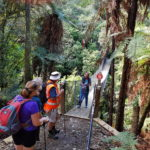 Guided tour on the Tara Mana Track - Credit Judy Bennett-Smith