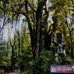 Beneath Whantonga in Te Apiti - Manawatu Gorge www.ManawatuNZ.co.nz